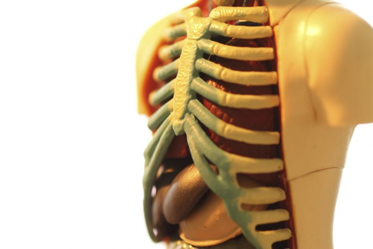 Mikronährstoff therapie Heilpraktiker Gilljohann Leichlingen Orthomolekulare Medizin
